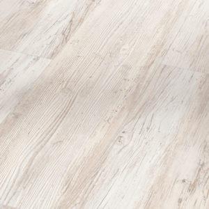 Pino piñonero blanco escandinavo