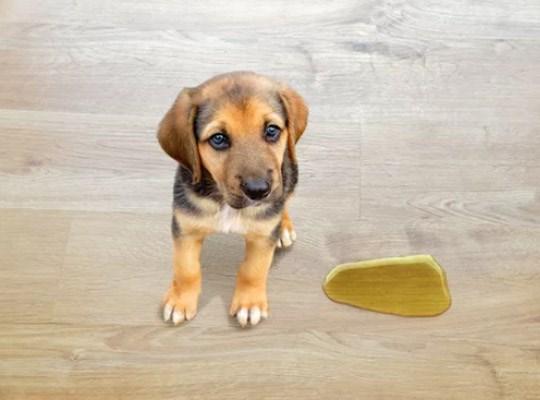 Riesgos que sufren los suelos con perros o gatos en casa