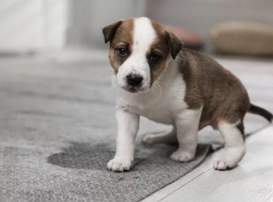 Suelos no aptos para casas con mascotas